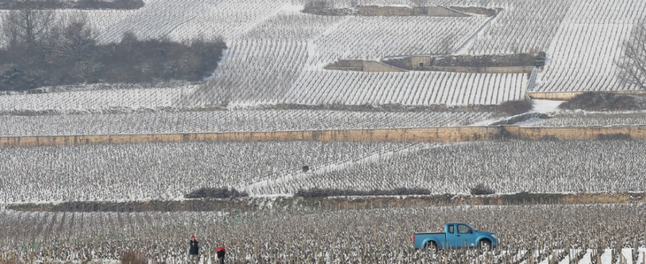 There is so much going on all year round in the vineyards near our holiday rental in Puligny Montrachet, Burgundy, even in Winter