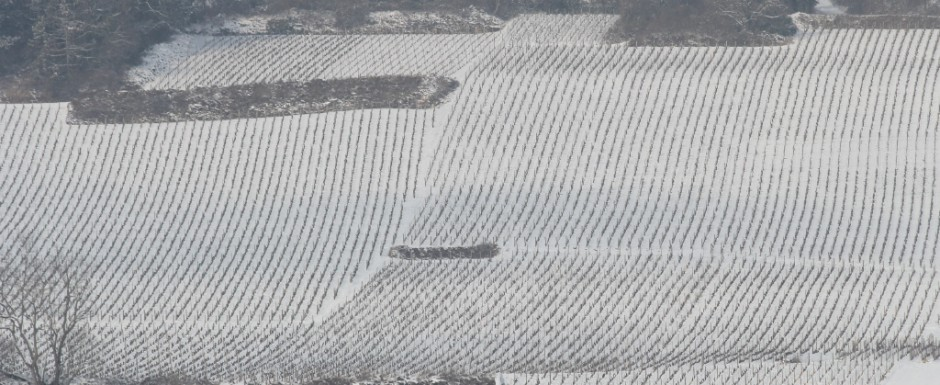 One of the best things to do in Puligny Montrachet, Burgundy in the winter is to see and photograph the stunning scenery