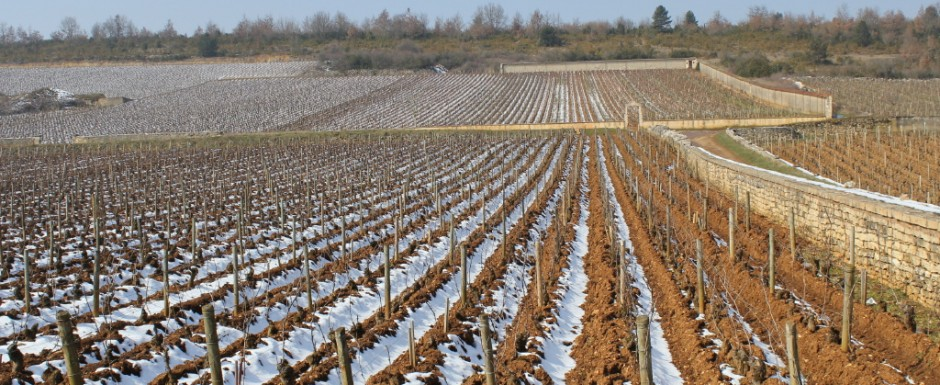 The Puligny vineyards look so good in winter