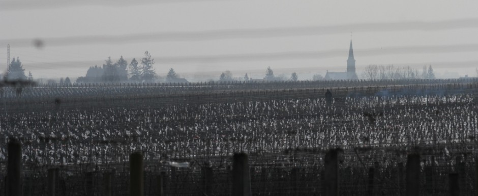 The vines in winter are absolutely stunning. This view is taken from near our vacation house in Puligny Montrachet.
