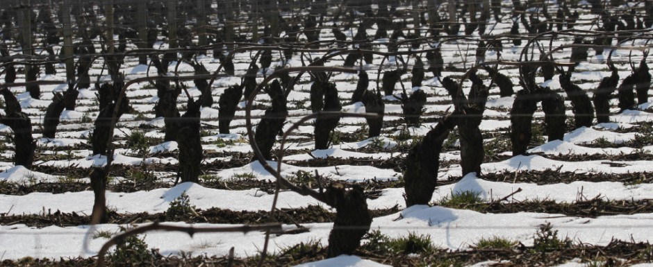 What to do in Puligny Montrachet in Winter? Photograph the stunning vines for one. Then take some of their progeny home for a tasting!